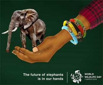 濒临野生动植物种国际贸易公约秘书处将与联合国